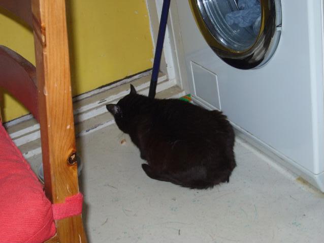 Zwarte kat Niels P1030760