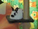 konijnen opgehaald bij de konijnenberg in waalwijk Th_P1040630