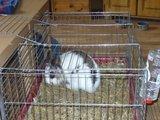 konijnen opgehaald bij de konijnenberg in waalwijk Th_P1040631