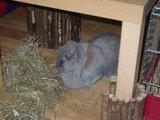 konijnen opgehaald bij de konijnenberg in waalwijk Th_P1040632