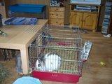 konijnen opgehaald bij de konijnenberg in waalwijk Th_P1040633