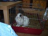 konijnen opgehaald bij de konijnenberg in waalwijk Th_P1040634