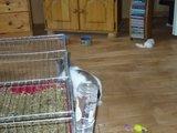 konijnen opgehaald bij de konijnenberg in waalwijk Th_P1040636