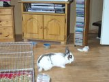 konijnen opgehaald bij de konijnenberg in waalwijk Th_P1040637