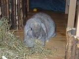 konijnen opgehaald bij de konijnenberg in waalwijk Th_P1040639