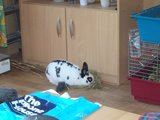 konijnen opgehaald bij de konijnenberg in waalwijk Th_P1040640