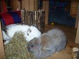 konijnen opgehaald bij de konijnenberg in waalwijk Th_P1040641