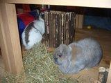 konijnen opgehaald bij de konijnenberg in waalwijk Th_P1040642