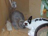 konijnen opgehaald bij de konijnenberg in waalwijk Th_P1040652