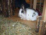 konijnen opgehaald bij de konijnenberg in waalwijk Th_P1040656