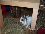 konijnen opgehaald bij de konijnenberg in waalwijk Th_P1040657