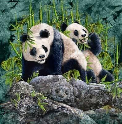Panda Illusion Pandas