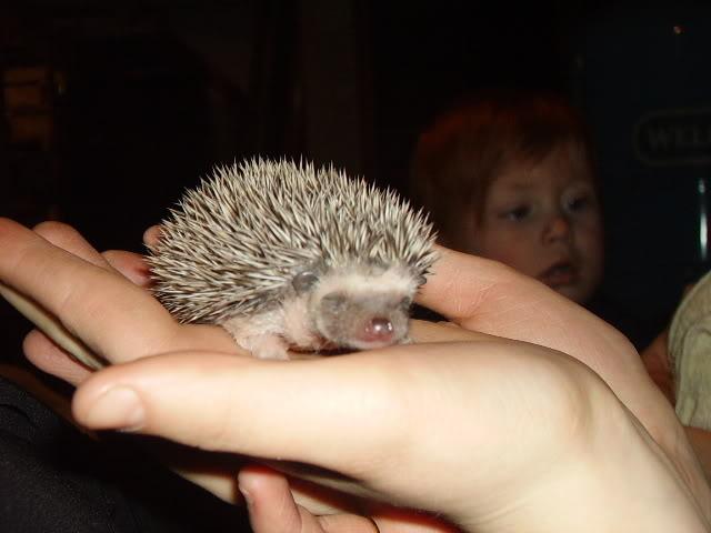 Mes premier bébés de 2009 PICT2932
