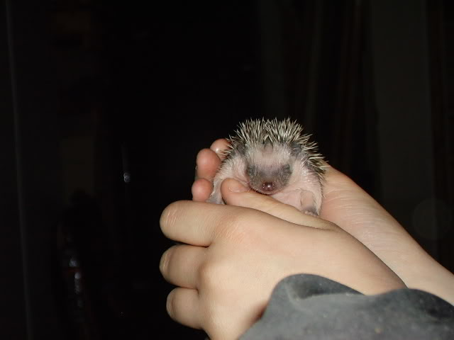 Mes premier bébés de 2009 PICT2934