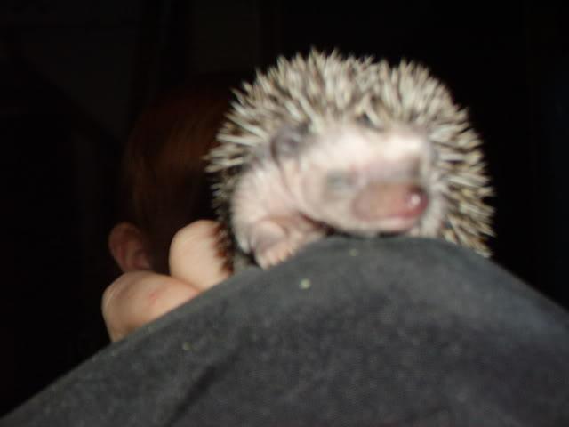 Mes premier bébés de 2009 PICT2936
