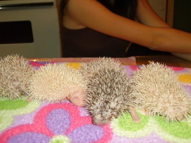 Mes premier bébés de 2009 PICT2974