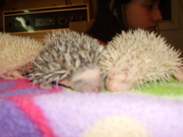 Mes premier bébés de 2009 PICT2975