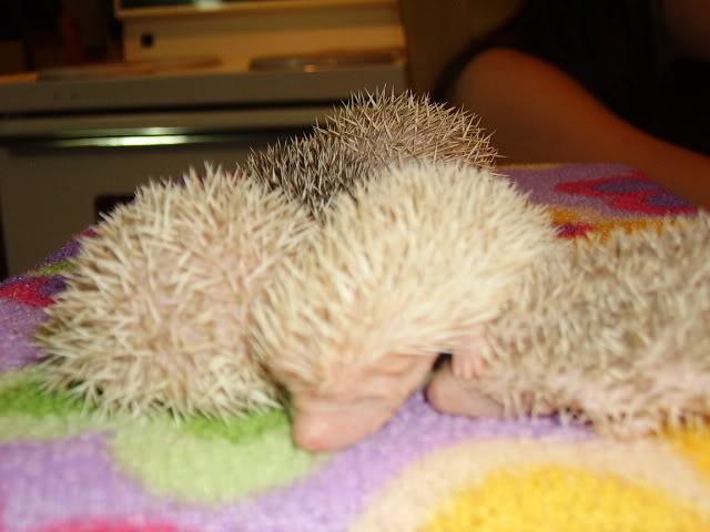 Mes premier bébés de 2009 PICT2976