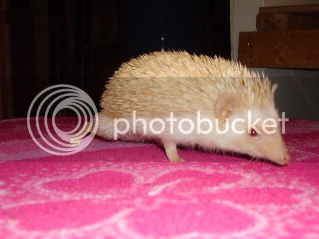 Mon beau Emmett PICT3457