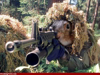 Squirrel hunters beware Sniper-Squirrel-30002
