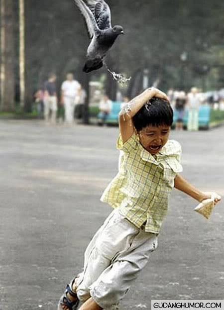 aduch Burung