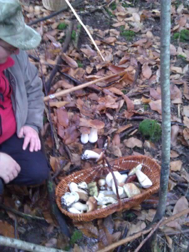 Premiers champignons ! Bac