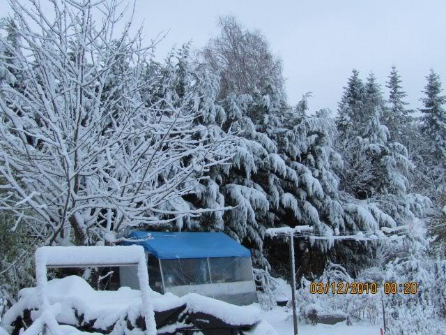 Stocker les plantes de l'hiver mais où ? - Page 3 Serrehiv