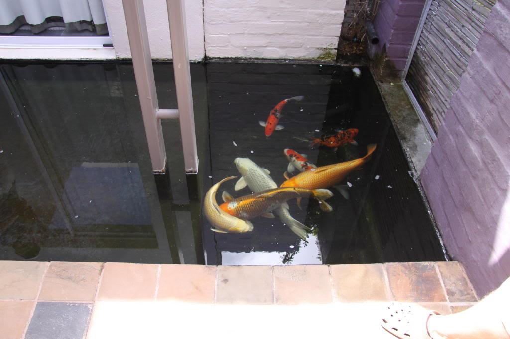 Pond Safari, 31st January 2010 IMG_1214_1