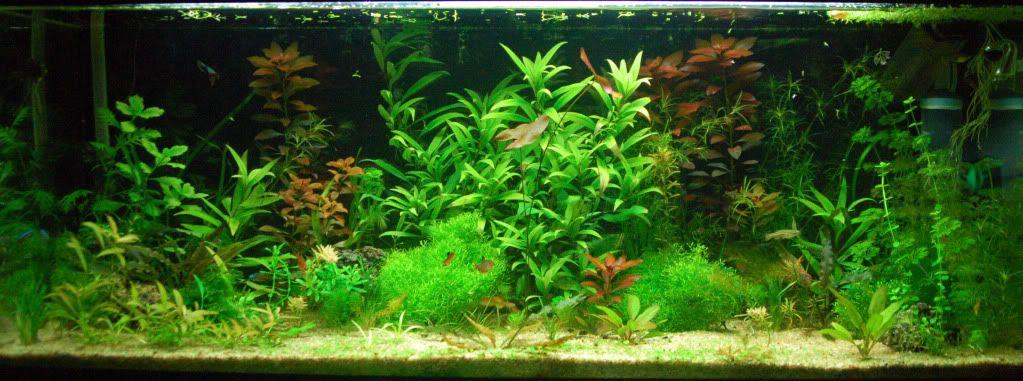 Evolución del acuario (Actualizo) 2feb-2012