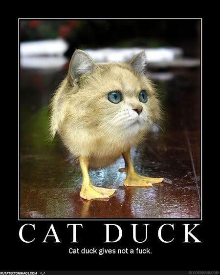 The wonders of facebook Cat_duck