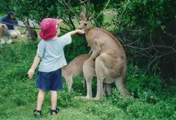In This Thread You Will Post Funny Pictures Kangaroo