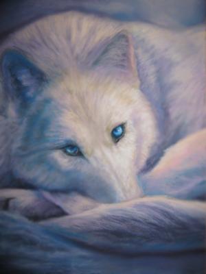 Ketzu White_wolf_in_snow_by_Acaciacat_zpshnah8imp