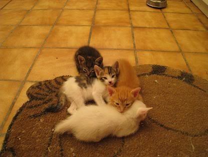 Mama y sus bebes en adopcion urgente Almeria Imagen002-6
