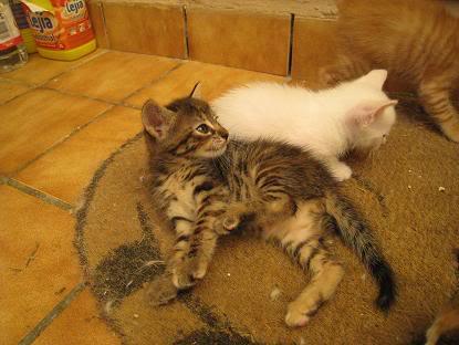 Mama y sus bebes en adopcion urgente Almeria Imagen019-2