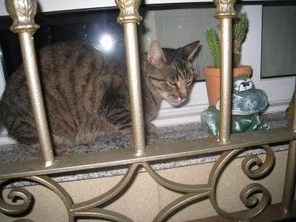 golosa gatita adulta joven lleva en la calle mucho tiempo almeria Imagen024
