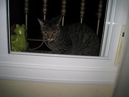 golosa gatita adulta joven lleva en la calle mucho tiempo almeria Imagen025