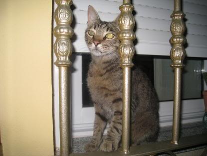 golosa gatita adulta joven lleva en la calle mucho tiempo almeria Imagen026-1
