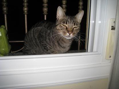 golosa gatita adulta joven lleva en la calle mucho tiempo almeria Imagen027-1