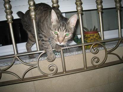 golosa gatita adulta joven lleva en la calle mucho tiempo almeria Imagen027