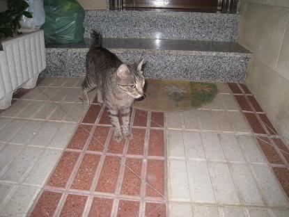 golosa gatita adulta joven lleva en la calle mucho tiempo almeria Imagen028-1
