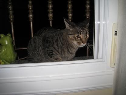 golosa gatita adulta joven lleva en la calle mucho tiempo almeria Imagen028-3