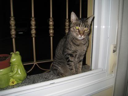 golosa gatita adulta joven lleva en la calle mucho tiempo almeria Imagen030-1