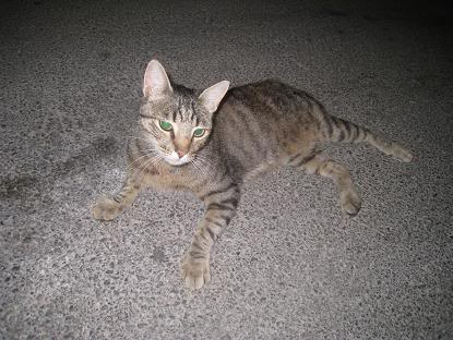 golosa gatita adulta joven lleva en la calle mucho tiempo almeria Imagen030