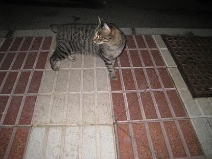 golosa gatita adulta joven lleva en la calle mucho tiempo almeria Imagen031-1