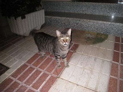 golosa gatita adulta joven lleva en la calle mucho tiempo almeria Imagen032-1