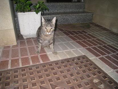 golosa gatita adulta joven lleva en la calle mucho tiempo almeria Imagen032