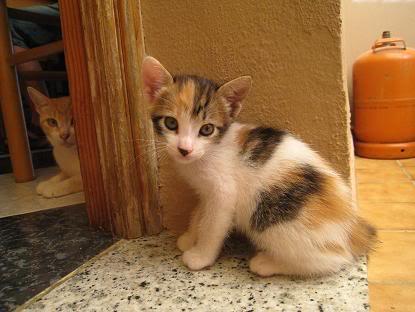 Mama y sus bebes en adopcion urgente Almeria Imagen037