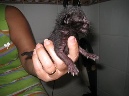 Alen bebe tirado en un contenedor... Almeria Imagen079-1