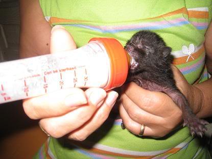 Alen bebe tirado en un contenedor... Almeria Imagen082-2