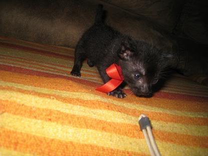 Alen bebe tirado en un contenedor... Almeria Imagen105-2